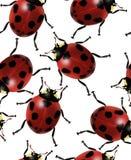 Het naadloze patroon van het lieveheersbeestje Royalty-vrije Stock Foto