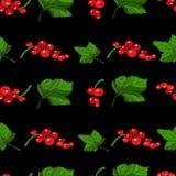 Het naadloze patroon van rode aalbessen Stock Afbeeldingen