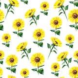 Het naadloze patroon van watercolourzonnebloemen vector illustratie