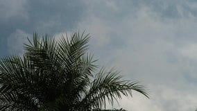 Het naderbij komen onweer door een palm 6 wordt bekeken die stock video