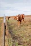 Het naderbij komen paardkudde stock fotografie