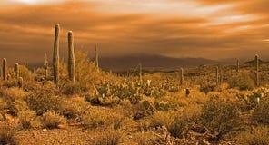 Het naderbij komen woestijnonweer Royalty-vrije Stock Foto