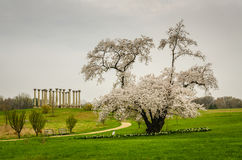 Het Nationale Arboretum van Verenigde Staten - Washington DC stock afbeelding