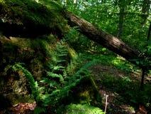 Het Nationale Bos van Allegheny royalty-vrije stock afbeelding