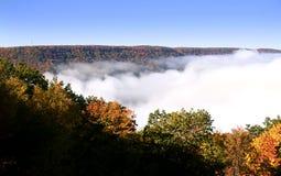 Het Nationale Bos van Allegheny Stock Foto