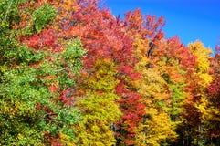 Het Nationale Bos van Allegheny stock afbeelding
