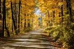 Het Nationale Bos van Allegheny royalty-vrije stock foto's