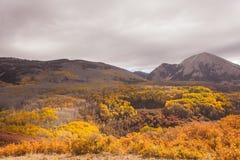 Het Nationale Bos van het Zout manti-La Stock Foto's