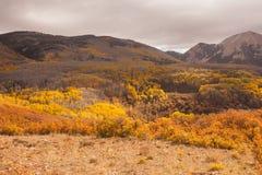 Het Nationale Bos van het Zout manti-La Royalty-vrije Stock Foto's