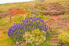 Het nationale domein Parque Ecologico doet Funchal Royalty-vrije Stock Fotografie
