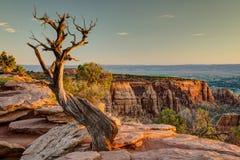 Het Nationale Monument van Colorado bij Zonsopgang Royalty-vrije Stock Foto
