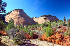 Het Nationale Park Mesa - Zion van het schaakbord royalty-vrije stock foto's