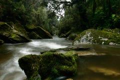 Het Nationale Park Nieuw Zeeland van Paparoa van de Kreek van het hol Royalty-vrije Stock Foto's