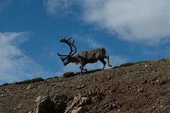 Het Nationale Park van Alaska Denali stock afbeeldingen