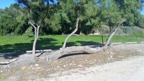 Het Nationale Park van Ashkelon Royalty-vrije Stock Foto's
