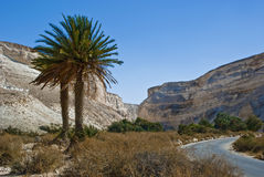 Het Nationale park van Avdat van Ein in woestijn van Negev, Israël Royalty-vrije Stock Afbeeldingen