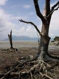 Het Nationale Park van Bako, Maleisië Royalty-vrije Stock Fotografie