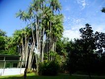 Het Nationale Park van Bako sarawak borneo maleisië royalty-vrije stock foto's