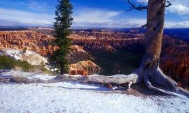 Het Nationale Park van Bryce met sneeuw stock afbeelding