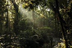 Het Nationale Park van Bwindiimpenterable Stock Afbeelding