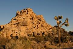 Het Nationale Park van de Boom van Joshua Royalty-vrije Stock Fotografie