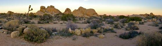Het Nationale Park van de Boom van Joshua Stock Foto's