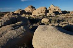 Het Nationale Park van de Boom van Joshua Royalty-vrije Stock Foto