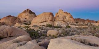 Het Nationale Park van de Boom van Joshua Stock Afbeelding