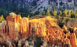 Het Nationale Park van de Canion van Bryce, Utah Stock Fotografie