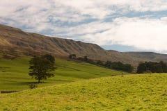 Het Nationale Park van de Dallen van Yorkshire royalty-vrije stock fotografie