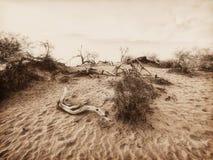 Het Nationale Park van de doodsvallei, Californië, de V.S., sepia versie Stock Afbeelding