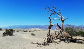 Het nationale park van de doodsvallei, Nevada, de V.S. royalty-vrije stock foto's