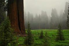 Het Nationale Park van de sequoia, Californië, de V stock afbeelding