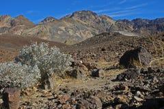 Het Nationale Park van de Vallei van de dood Stock Foto's