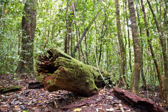 Het Nationale Park van de Waaier van Paluma Royalty-vrije Stock Fotografie
