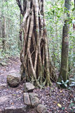 Het Nationale Park van de Waaier van Paluma Stock Fotografie