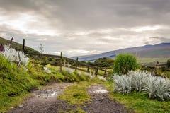 Het Nationale Park van Ecofarmcotopaxi Stock Afbeelding