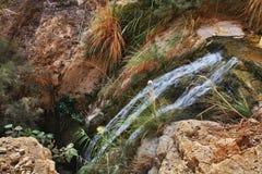 Het nationale Park van Eingedi israël Stock Afbeeldingen