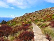Het Nationale Park van Fiordland (Park3) stock fotografie