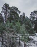 Het Nationale Park van Gauja Stock Fotografie