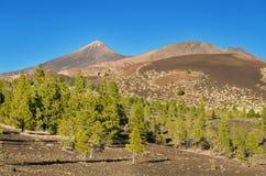 Het nationale park van Gr Teide, Tenerife, Canarische Eilanden, Spanje Stock Foto's