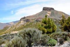 Het nationale park van Gr Teide in Tenerife (Spanje) Royalty-vrije Stock Afbeeldingen