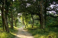 Het nationale park van Jim corbett. India royalty-vrije stock foto's