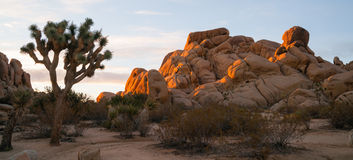 Het Nationale Park van Joshua Tree Sunrise Cloud Landscape Californië royalty-vrije stock foto