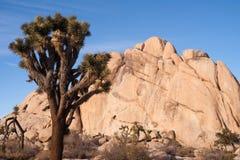 Het Nationale Park van Joshua Tree Sunrise Cloud Landscape Californië Royalty-vrije Stock Afbeeldingen