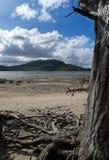 Het nationale park van Killarney Stock Afbeelding