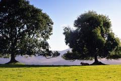 Het Nationale Park van Killarney Stock Afbeeldingen