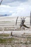 Het Nationale Park van kunstenaarspaintpots Yellowstone, Wyoming Royalty-vrije Stock Foto