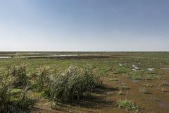 Het Nationale Park van meermanyara Stock Afbeeldingen