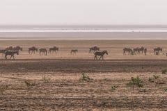 Het Nationale Park van meermanyara royalty-vrije stock foto